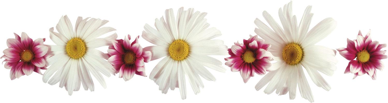 flower4126